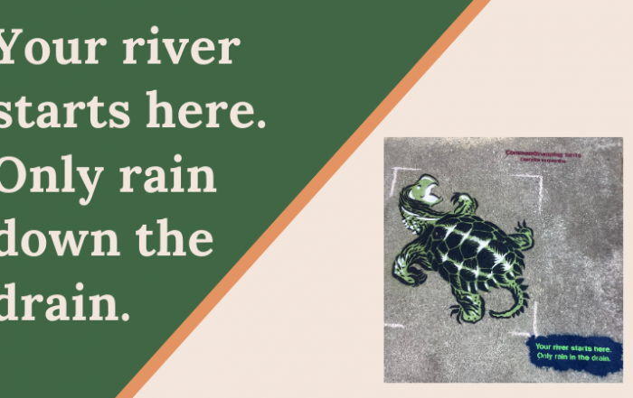 snapping turtle painted on storm drain