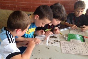 Fourth Grade Science Inquiry (4)
