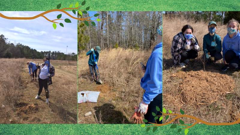 three photos of AP Environmental Science students planting trees